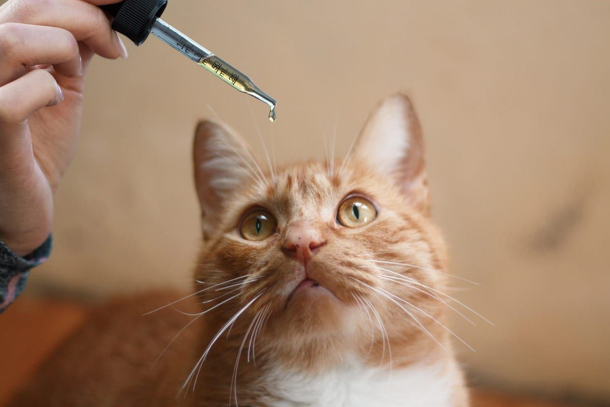 Best CBD Oil for Cats: The Top 3 CBD Brands You Can Trust