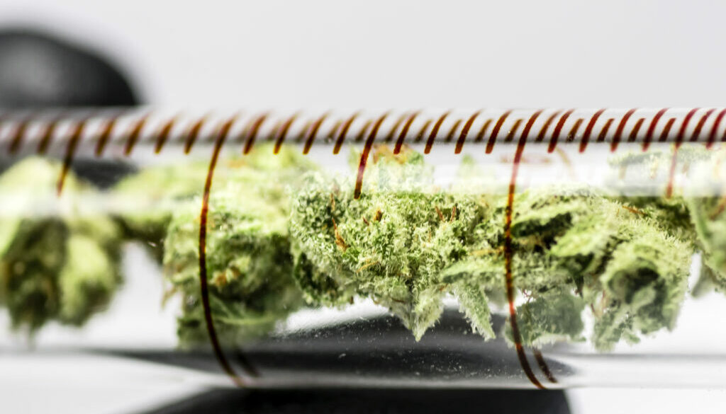 NIST to Help Labs Achieve Accurate THC, CBD Measurements